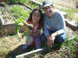 Huge radishes thrive in biodynamic garden, pollenated by bees kept at the Highland Hall Waldorf School.